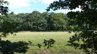 Zwei Bauplatzgrundstücke am Landschaftsschutzgebiet und Weidefläche